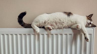 Katt på element